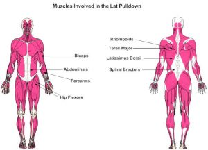 lat pulldown muscles